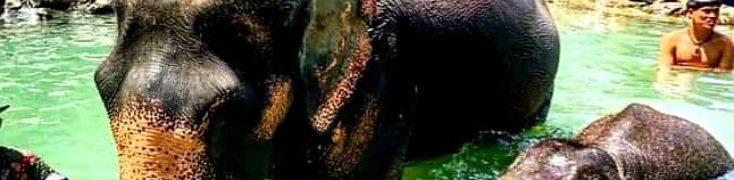 SWIM WITH ELEPHANTS IN PHUKET